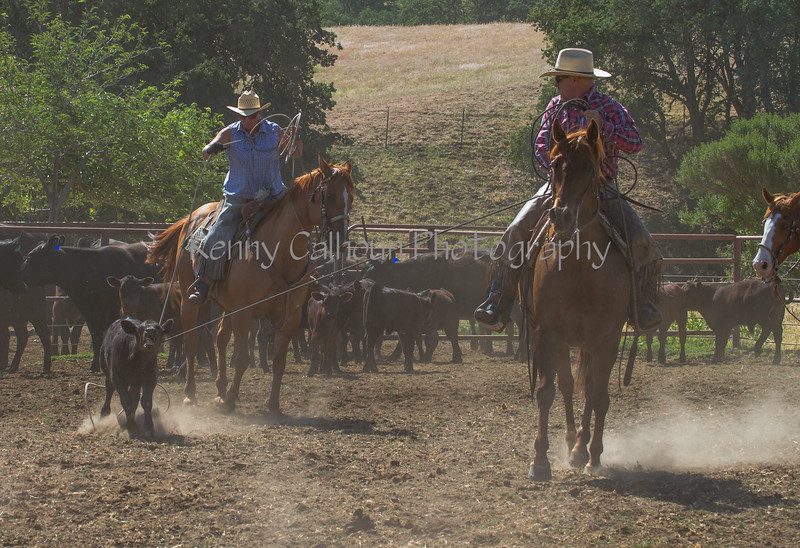 Yolo Land and Cattle 2014IMG_4856