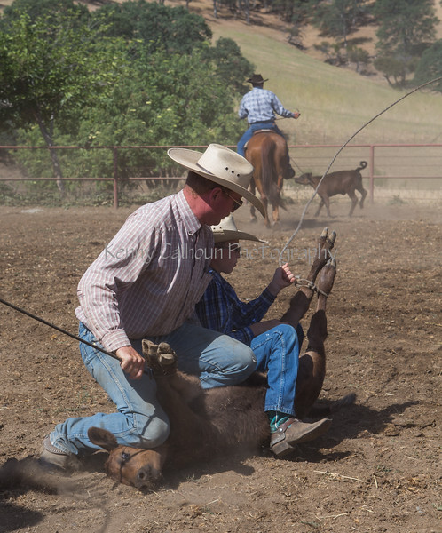 Yolo Land and Cattle 2014_N5A4016