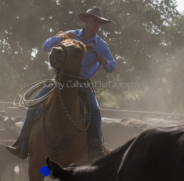 Yolo Land and Cattle 2014IMG_4729
