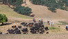 Yolo Land and Cattle 2014_N5A3785