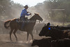 Yolo Land and Cattle 2014IMG_4727