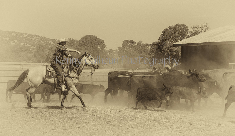 Yolo Land and Cattle 2014_N5A4204-Edit