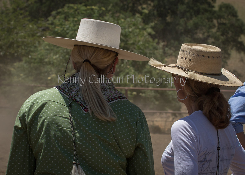 Yolo Land and Cattle 2014IMG_5215