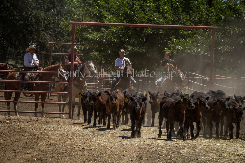 Yolo Land and Cattle 2014IMG_5054