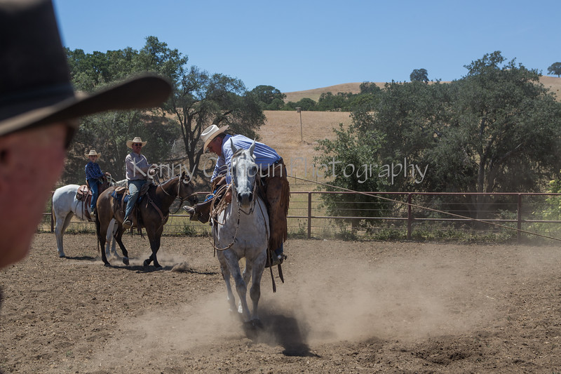 Yolo Land and Cattle 2014_N5A4560
