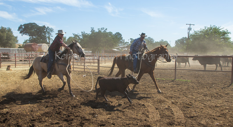 Yolo Land and Cattle 2014_N5A4021