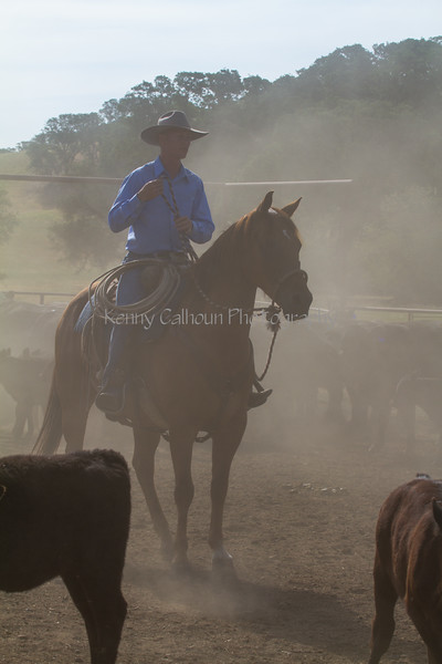Yolo Land and Cattle 2014IMG_4702