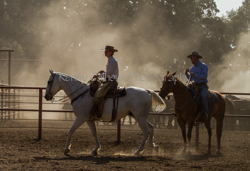 Yolo Land and Cattle 2014IMG_4658-2
