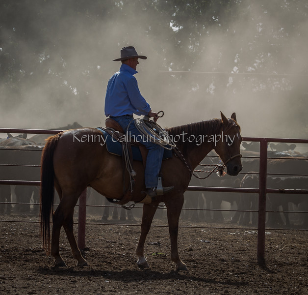 Yolo Land and Cattle 2014IMG_4653-2