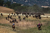 Yolo Land and Cattle 2014IMG_5266