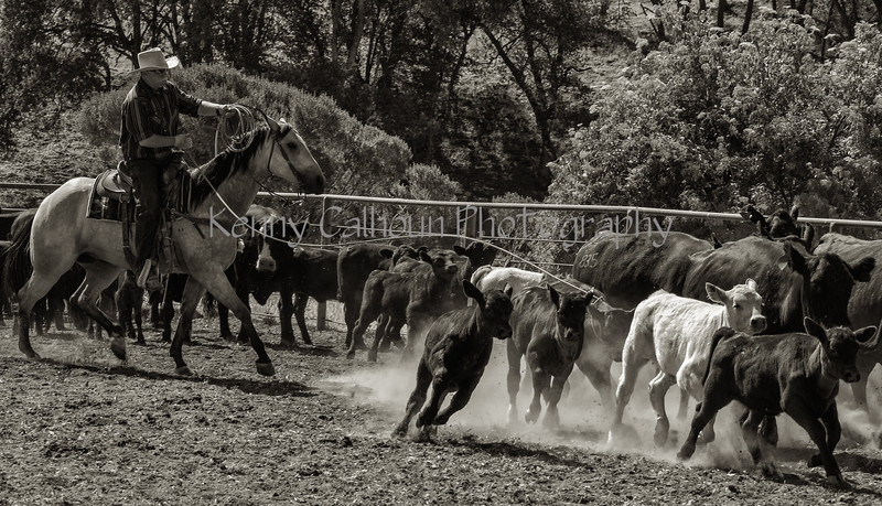 Yolo Land and Cattle 2014IMG_4869-Edit