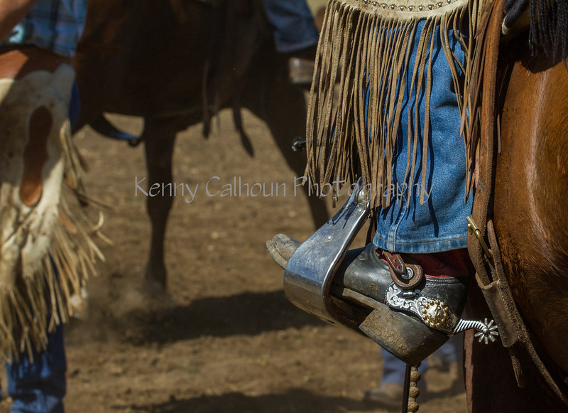 Yolo Land and Cattle 2014IMG_4887