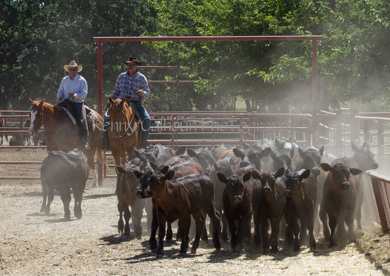 Yolo Land and Cattle 2014IMG_4937