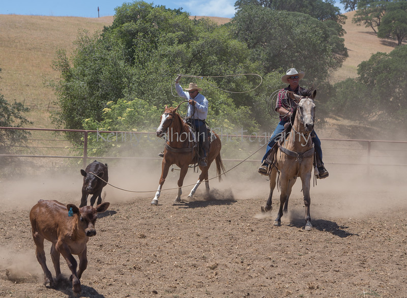 Yolo Land and Cattle 2014_N5A4639