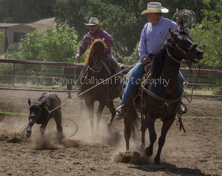 Yolo Land and Cattle 2014IMG_4912