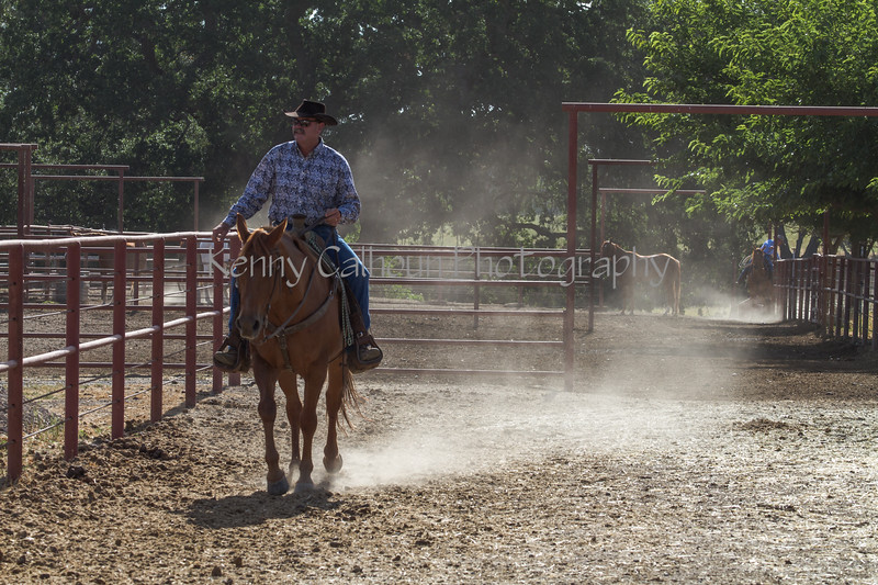 Yolo Land and Cattle 2014IMG_4621