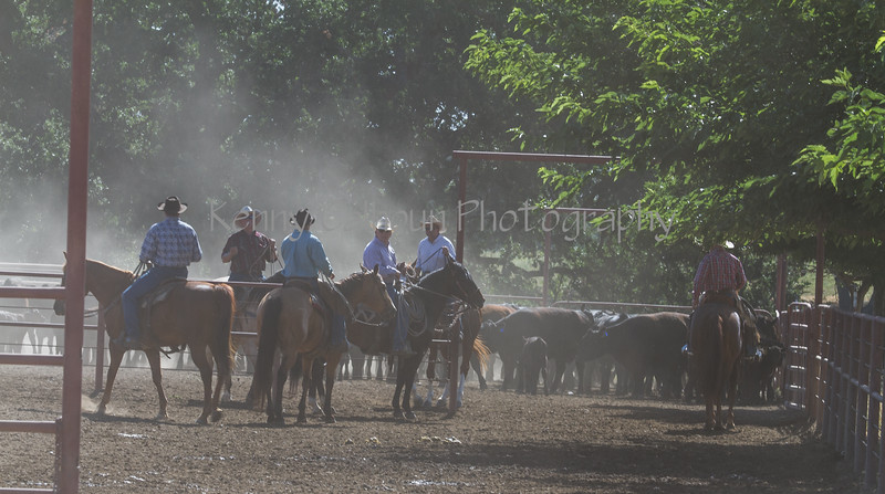 Yolo Land and Cattle 2014IMG_4786