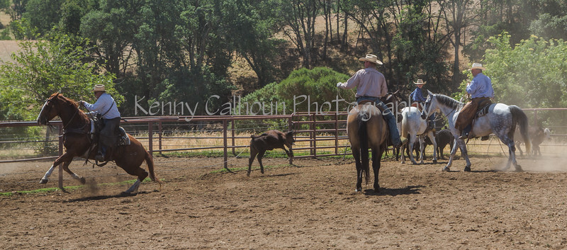 Yolo Land and Cattle 2014_N5A4424-2