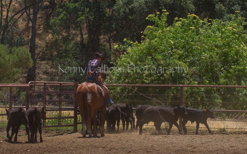 Yolo Land and Cattle 2014IMG_5191