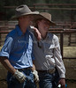 Yolo Land and Cattle 2014IMG_5158