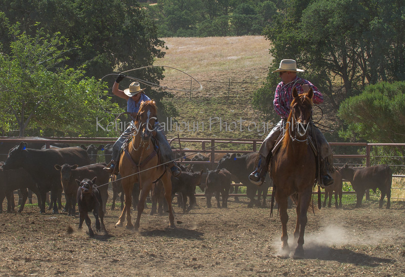 Yolo Land and Cattle 2014IMG_4853