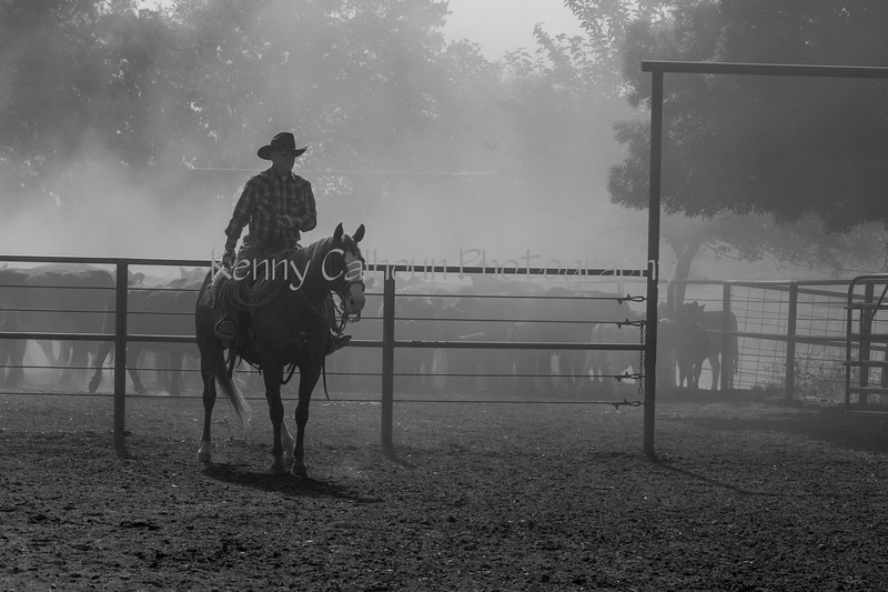 Yolo Land and Cattle 2014IMG_4663