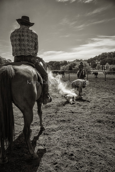 Yolo Land and Cattle 2014_N5A4109-Edit