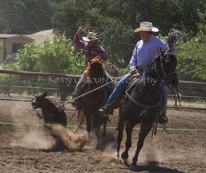 Yolo Land and Cattle 2014IMG_4910