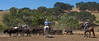 Yolo Land and Cattle 2014_N5A4484