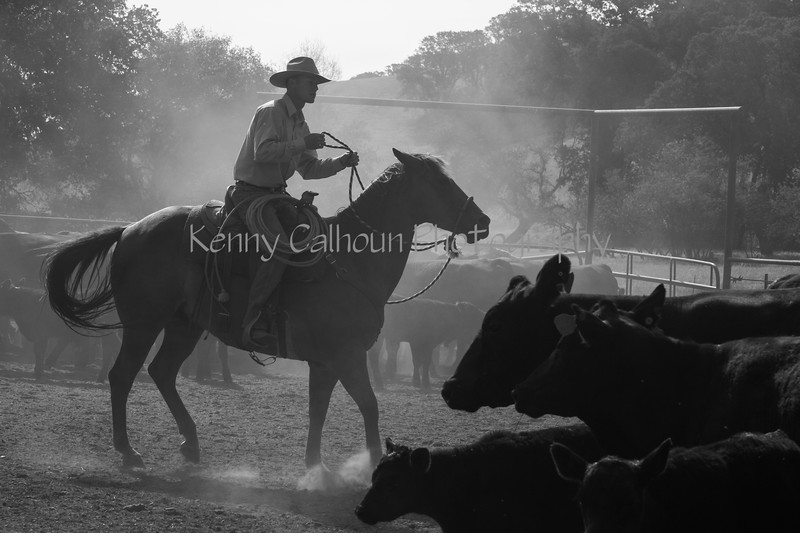 Yolo Land and Cattle 2014IMG_4727-Edit