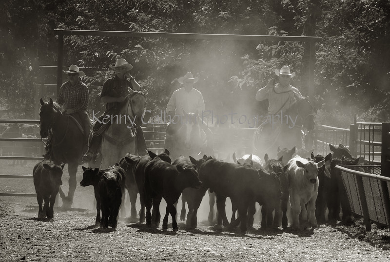 Yolo Land and Cattle 2014IMG_4809-Edit