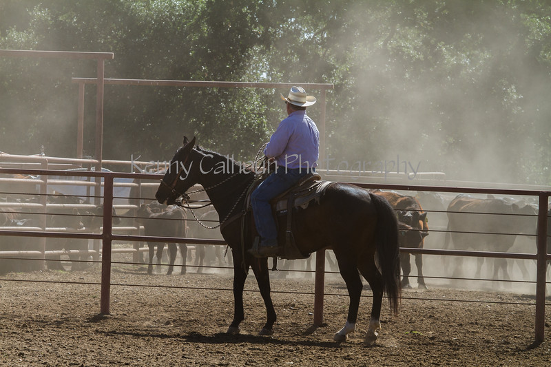 Yolo Land and Cattle 2014IMG_4799