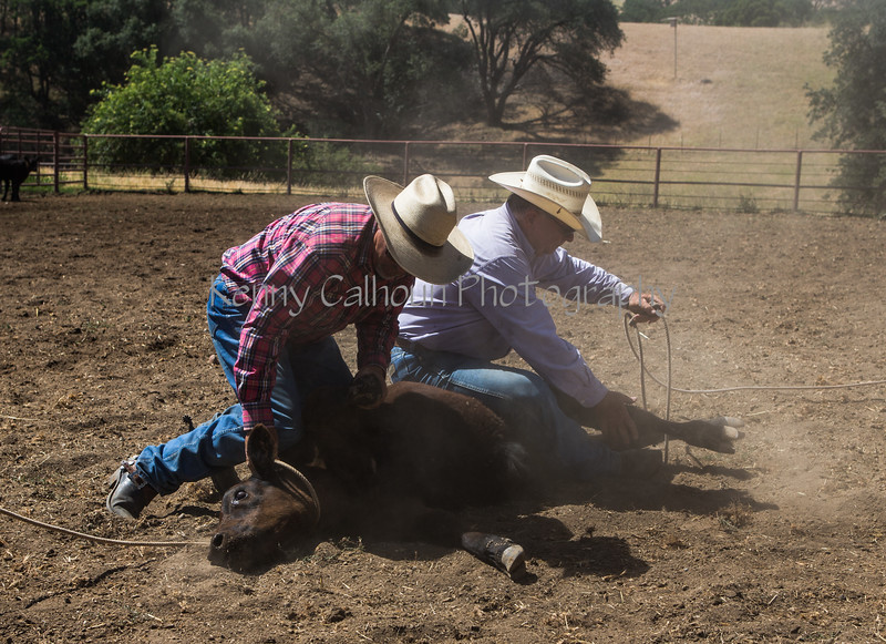 Yolo Land and Cattle 2014_N5A4327