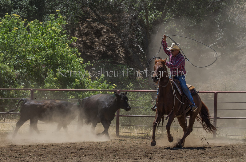 Yolo Land and Cattle 2014IMG_5010