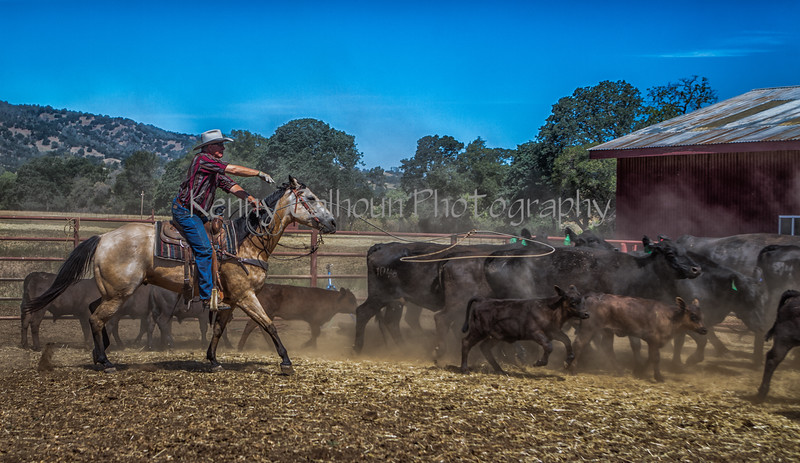 Yolo Land and Cattle 2014_N5A4204-Edit-2