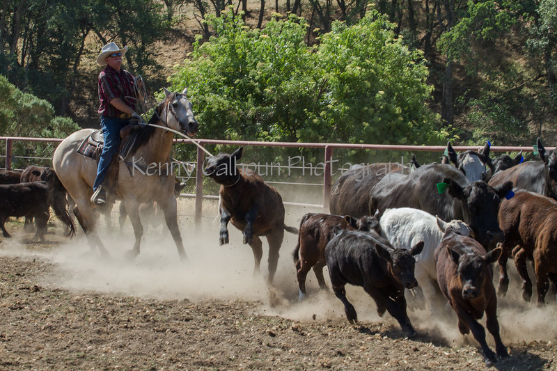 Yolo Land and Cattle 2014IMG_4871