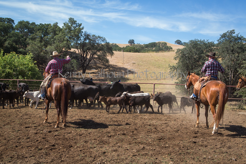 Yolo Land and Cattle 2014_N5A3990