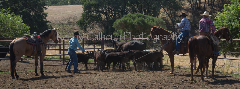 Yolo Land and Cattle 2014_N5A4082