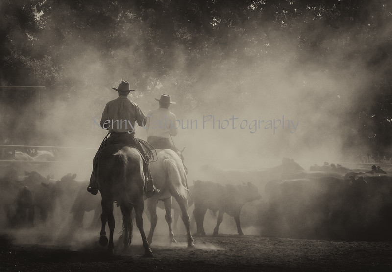 Yolo Land and Cattle 2014IMG_4741-Edit-3