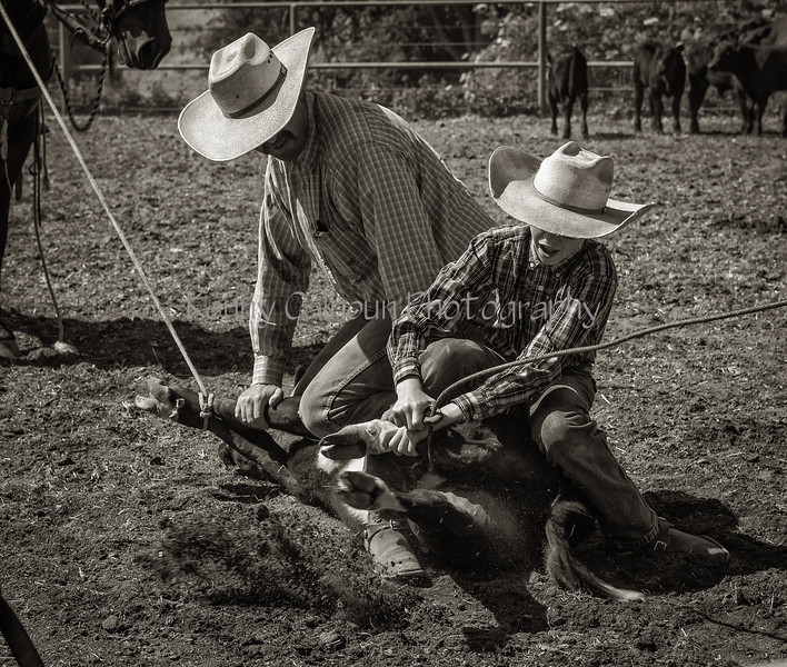 Yolo Land and Cattle 2014_N5A4181-Edit