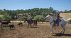 Yolo Land and Cattle 2014_N5A4360