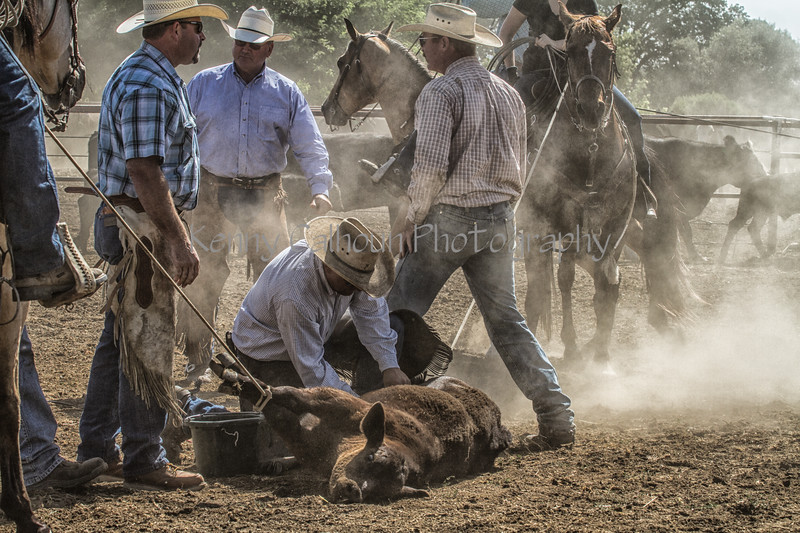 Yolo Land and Cattle 2014IMG_4844-Edit
