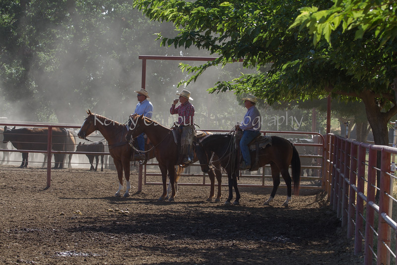 Yolo Land and Cattle 2014IMG_4792