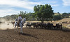 Yolo Land and Cattle 2014_N5A3846