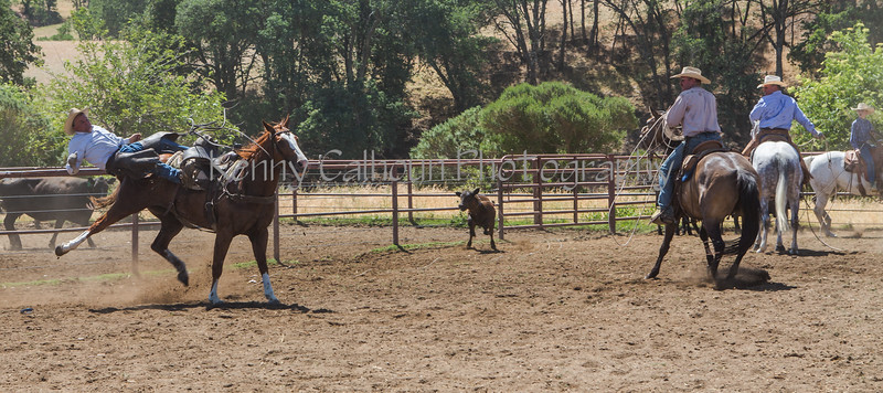 Yolo Land and Cattle 2014_N5A4430-2