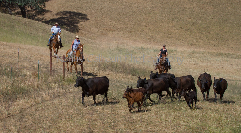 Yolo Land and Cattle 2014IMG_4842