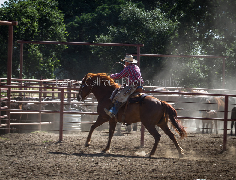 Yolo Land and Cattle 2014IMG_4793