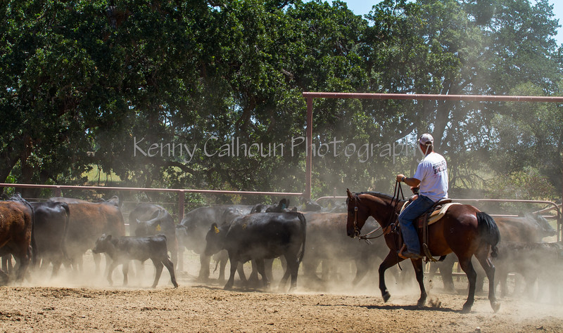 Yolo Land and Cattle 2014IMG_5034