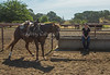 Yolo Land and Cattle 2014_N5A3967