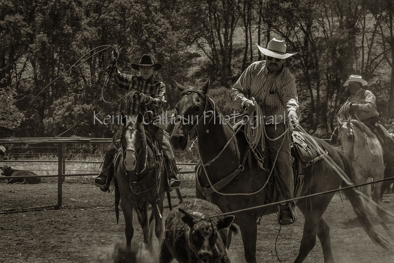 Yolo Land and Cattle 2014IMG_5081-Edit